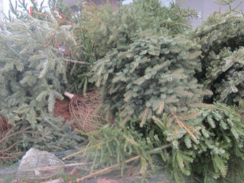 Odvoz božićnih drvca 2018.